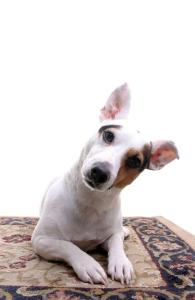 Questioning, pleasding dog. Atta boy.